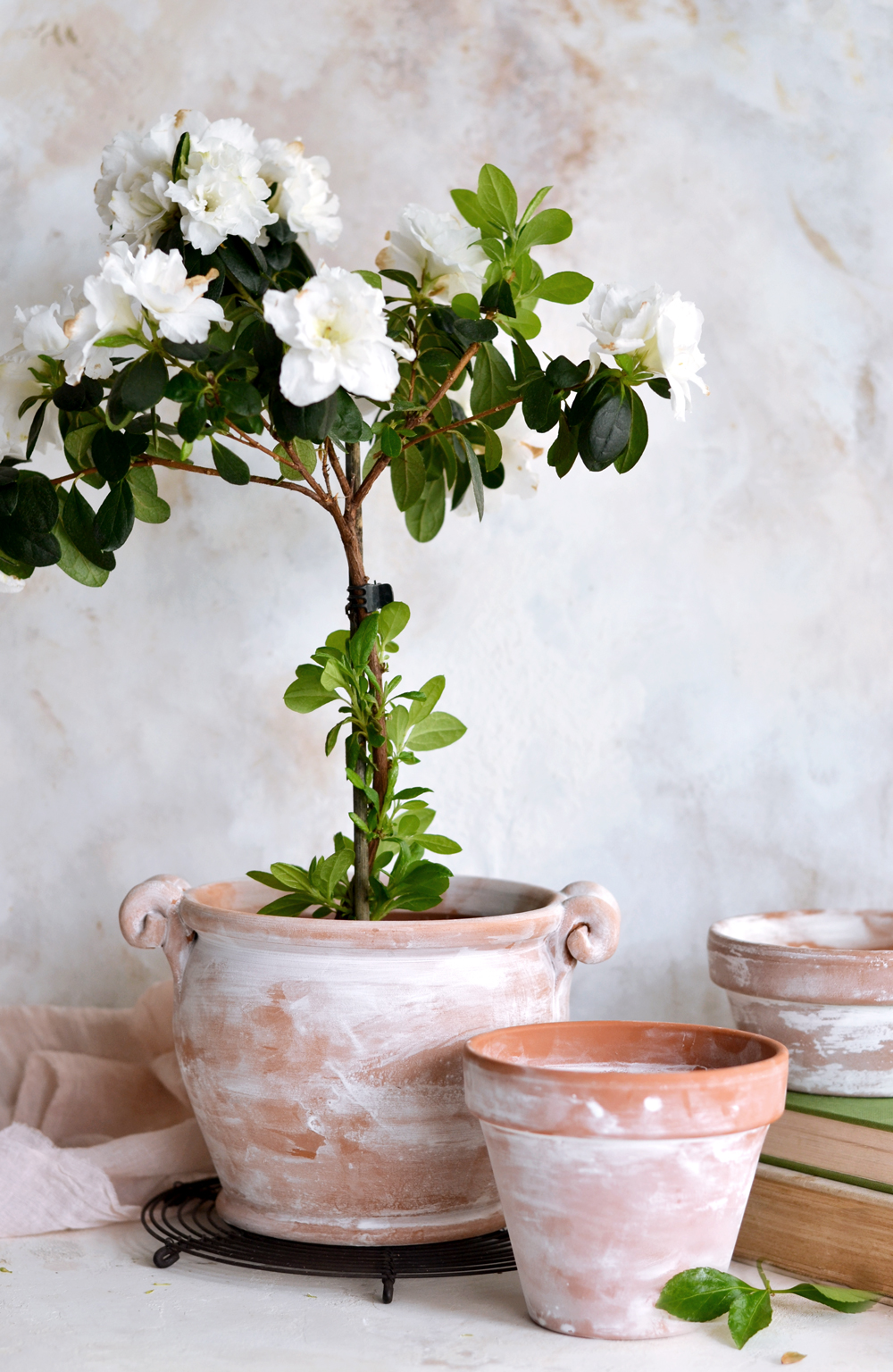 DIIY Chalk Distressed Terracotta Pots - Paint gorgeous chalk distressed terracotta pots in just 5 minutes! Create interesting dripping effects and give new terracotta pots an aged, antique, old world look makeover.